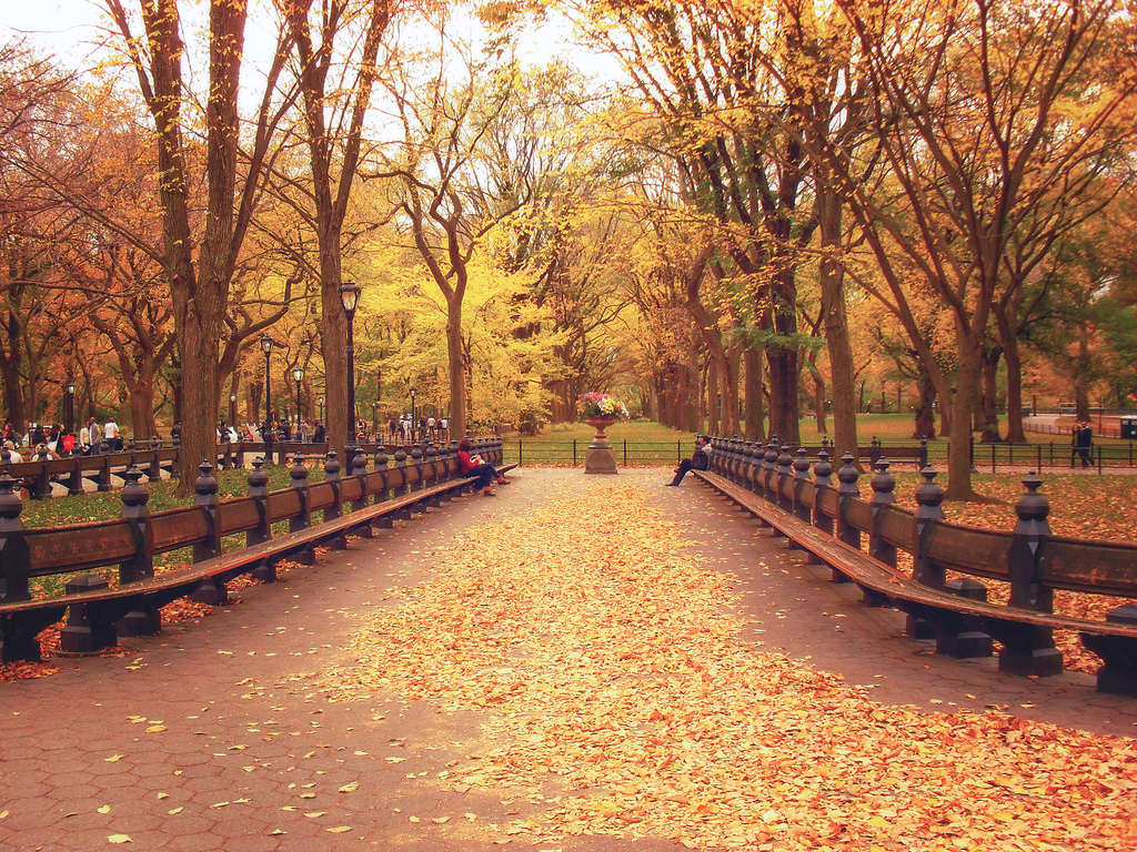 """Central Park"" by Vivienne Gucwa on Flickr"