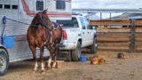 horse-419739_960_720