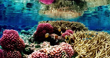 colorful_underwater_landscape_of_a_coral_reef