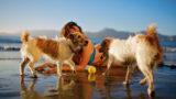 1024px-jackie_martinez_with_two_dogs